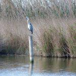 Distintas clases de aves de la Albufera en la actividad de Ambientalys