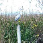 Clase de ave de la Albufera en la actividad familiar de Ambientalys