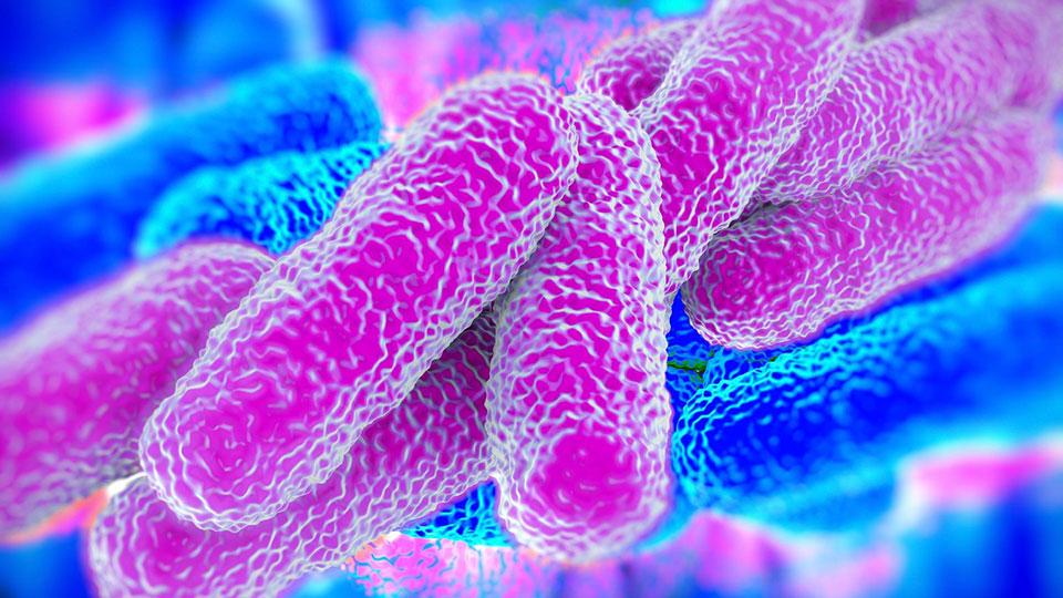 Prevalencia de Legionella spp